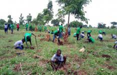 School pupils in Kiryandongo plant trees. Apio Josephine / Save the Children